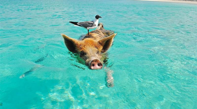 tether bahamas