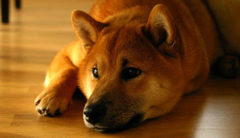 dogecoin doge verwachting gamestop koers elon musk verwachting